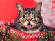 Real life cat LIL BUB shares new video 'New Gravity'